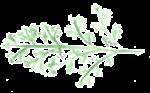 Leafy Vine.png