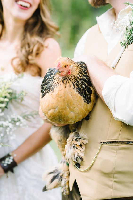 Have you ever seen a wedding chicken?  Photo by  Alicia King Photography
