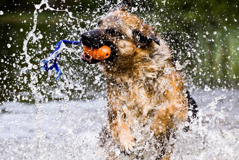 KJÆLEDYR: Jeg jobber som hundetrener, og har flere års erfaring med å fotografere hunder og deres naturlige uttrykk. Enten det er i skogen, på agilitybanen eller i hagen deres.