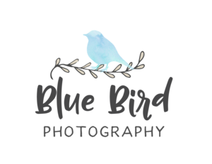Blue Bird Photography