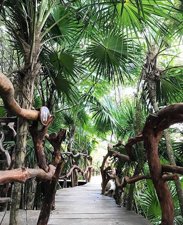 🌴Look for the bare necessities. The simple bare necessities. Forget about your worries and your strife - Baloo 🌴 #TheJungleBook #Azulik #NoWorries #Travel #Goals #Treehouse #Jungle #Beautiful #ReconnectionSanctuary #Tulum #Mexico #Path #Explore #Amazing #Nature #Go #Get #Lost #Vacation #Holiday #HakunaMatata #LovedByGuests #Paradise #Adventure #RePost 📷@renataloves