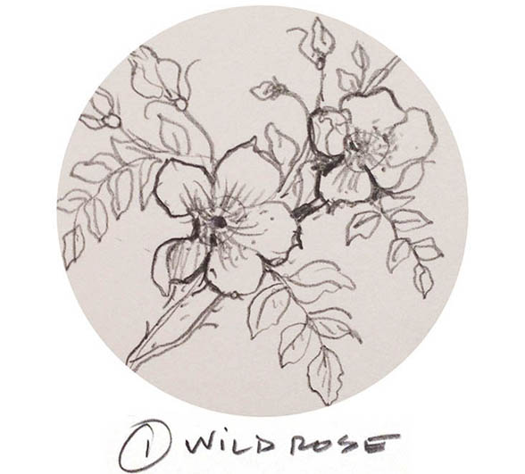 Wild-Rose1.jpg