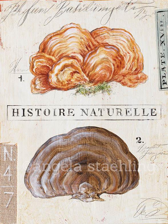NaturesFungus-ASN6blog1