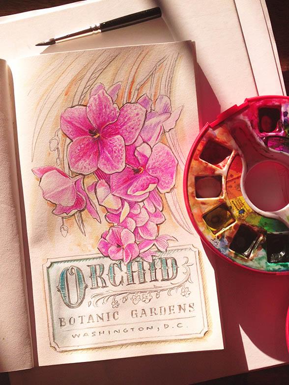 OrchidsFinal2
