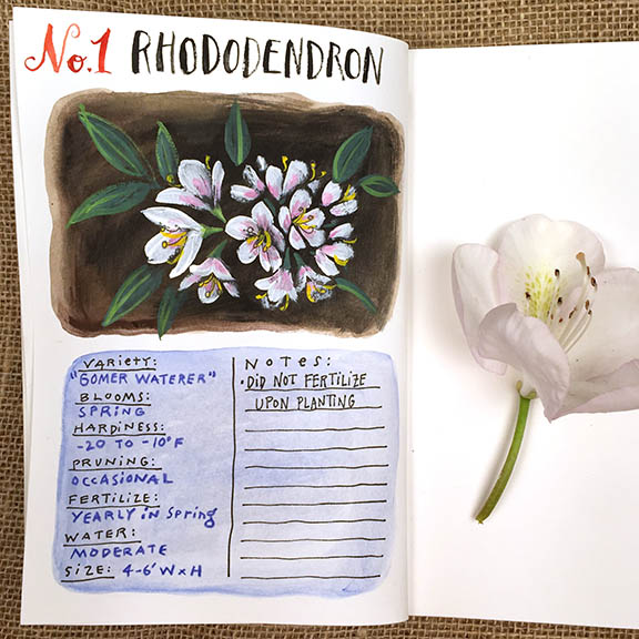 1 Rhododendron1