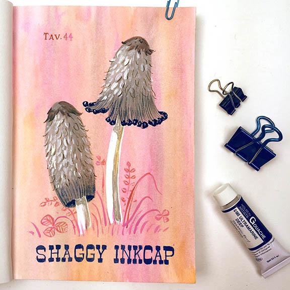 Shaggy Inkcap