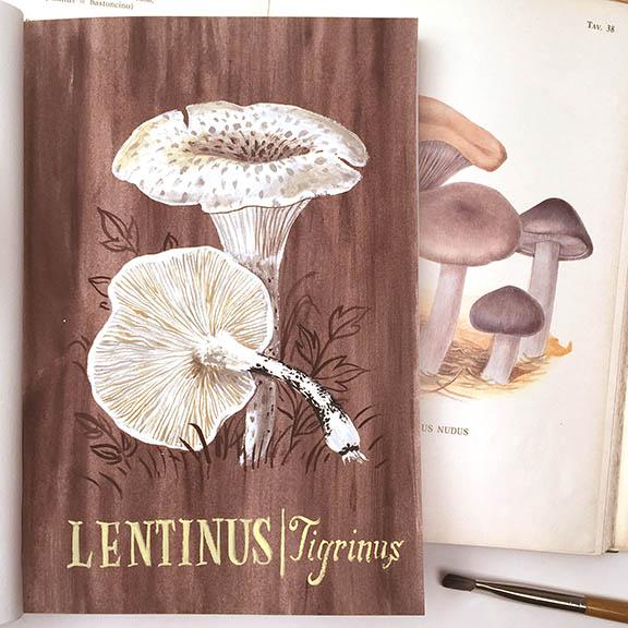 Lentinus