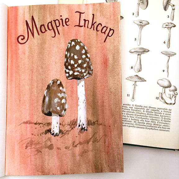 Magpie Inkcap