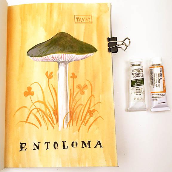 Entoloma