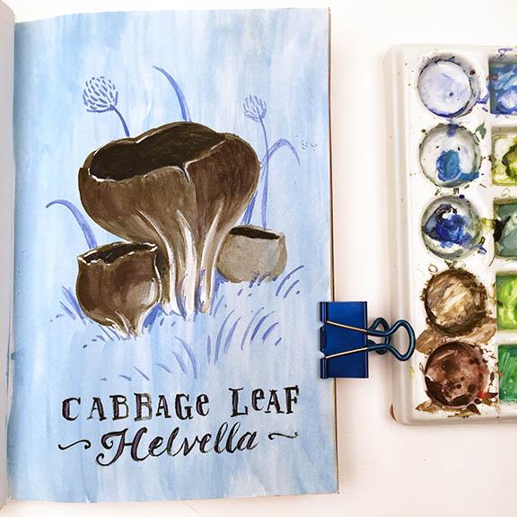 Cabbage Leaf Helvella