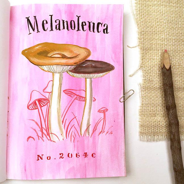 Melanoleuca