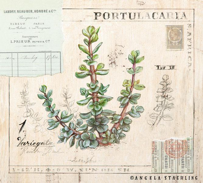 Portulacaria
