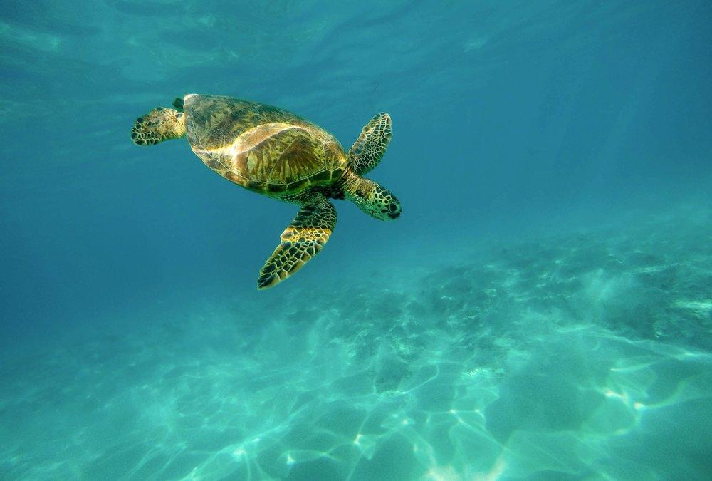 Maui-Reef-Scuba-Diving-Chris-Brock.png