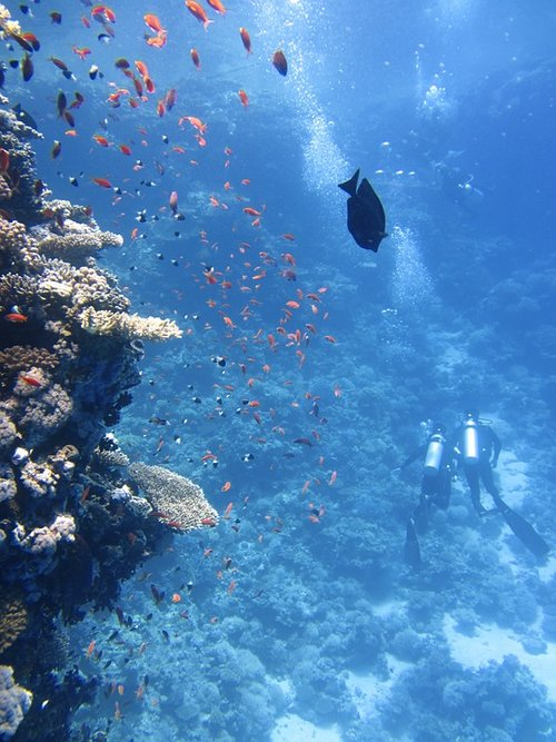 guided-dive-maui-hawaii.png