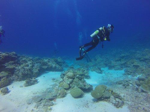 Deep-Dive-Maui.png