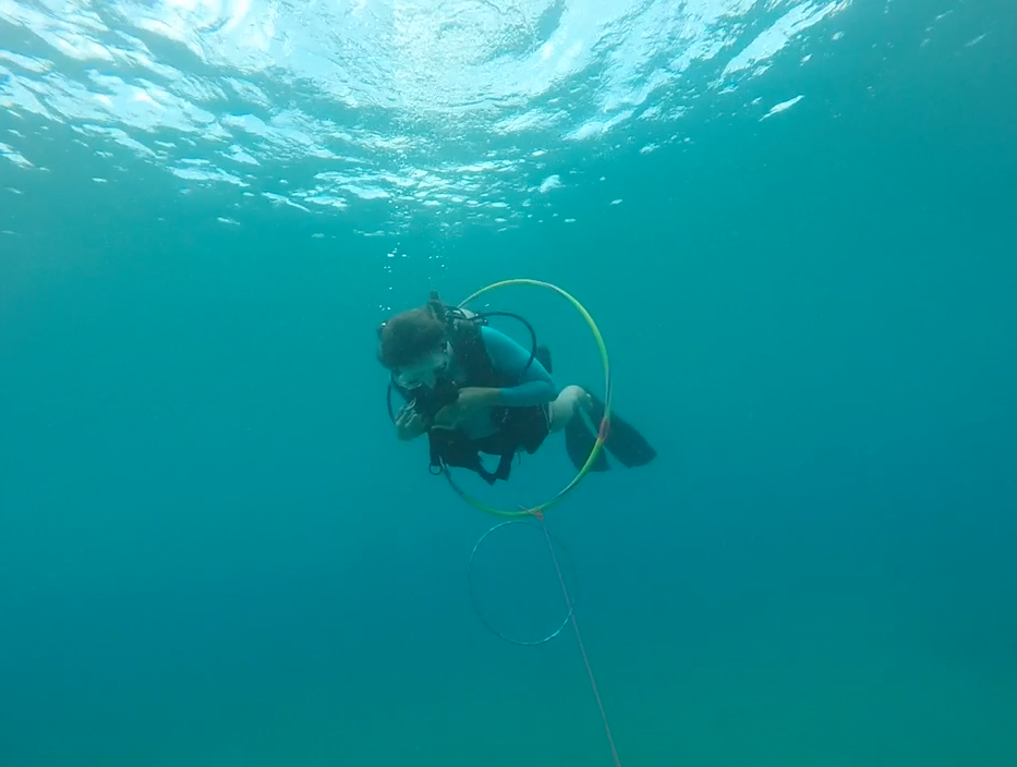 scuba-diving-maui-certification.png