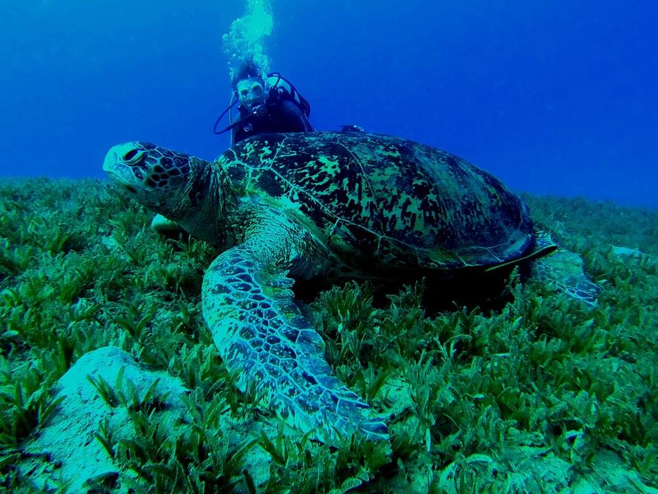 turtle-scuba-diving.png