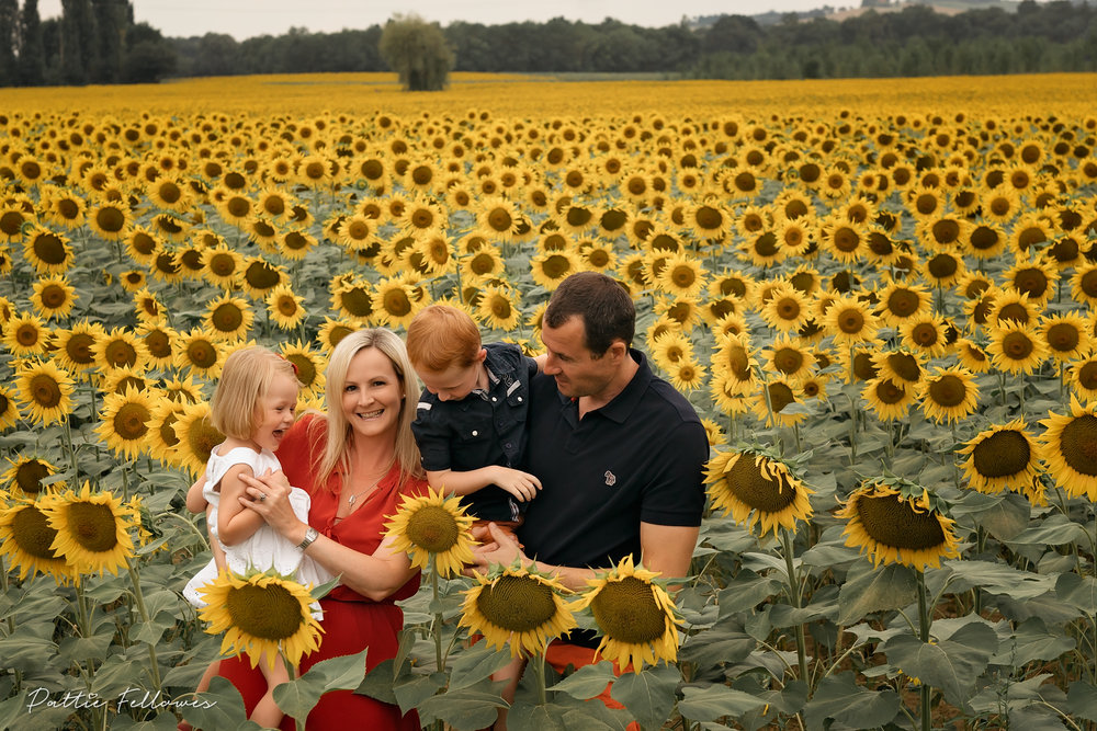 sunflowers2018-4.jpg