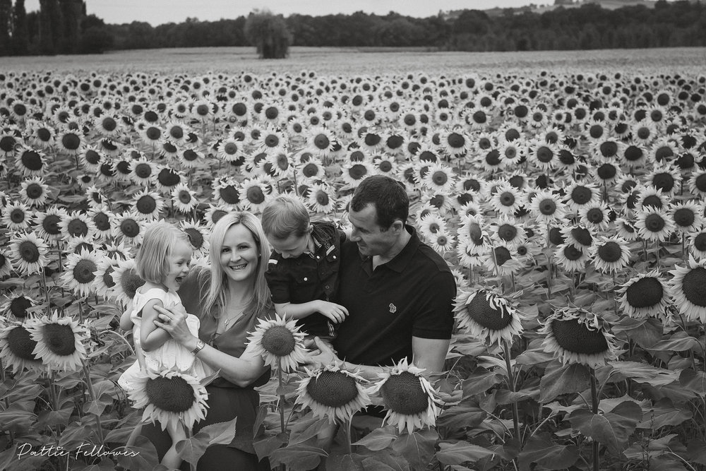 sunflowers2018-5.jpg