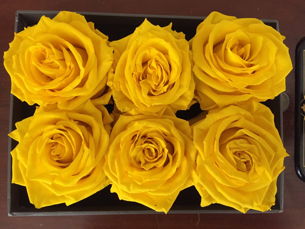 Bird Rose Yellow