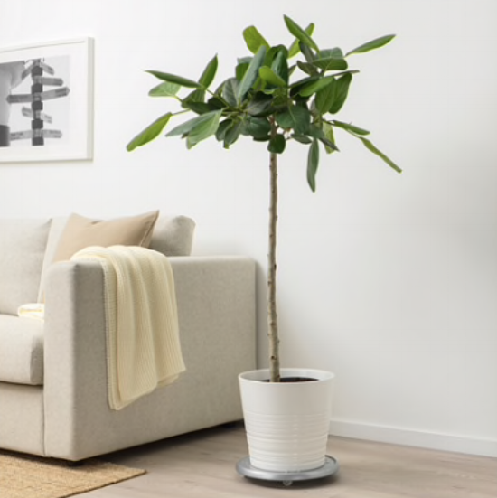 Ikea - potted plant