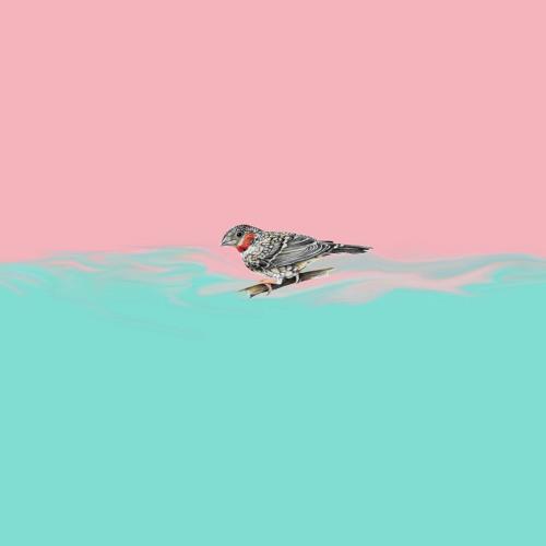 cln - owls