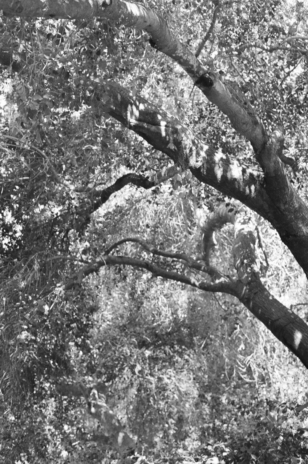TOPANGA-FILM-1-152.jpg