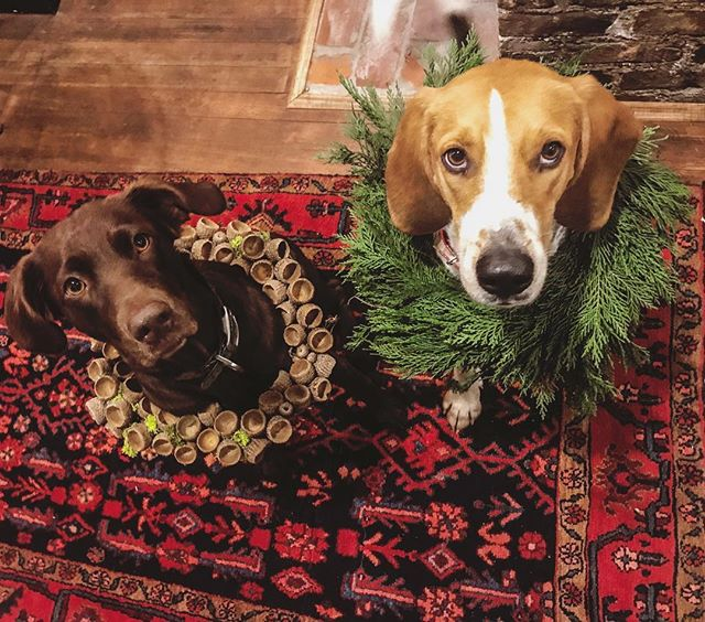 The Browns and Hounds team, helping spread the holiday cheer🎄 We are working on wreath orders and can't wait to get them to their new homes!