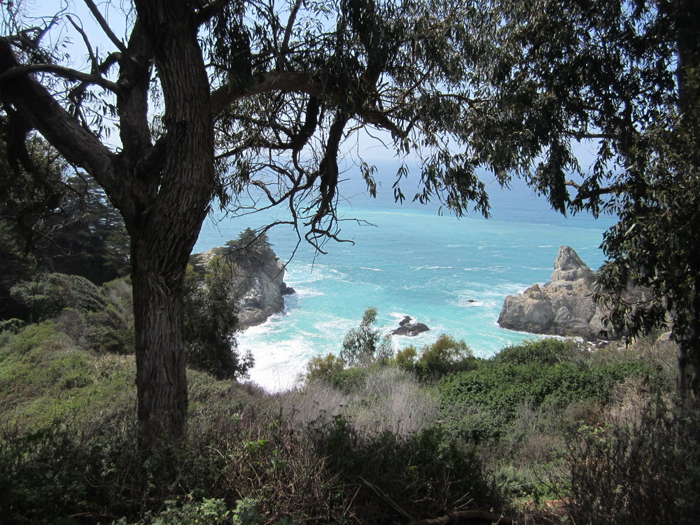 McWay Falls Trail and VIew