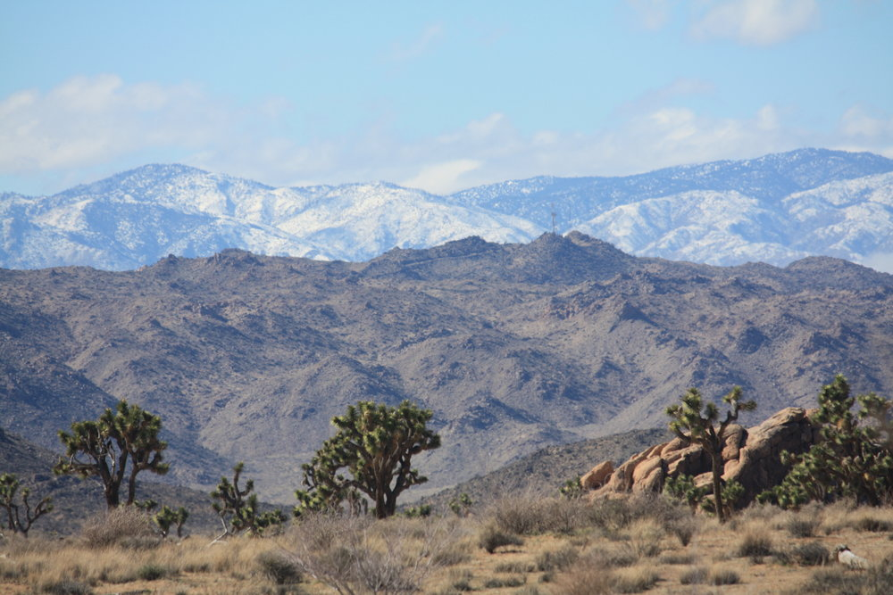 Thank you for looking! Here's an awesome bonus pic: Snow in the mountains as seen from Joshua Tree