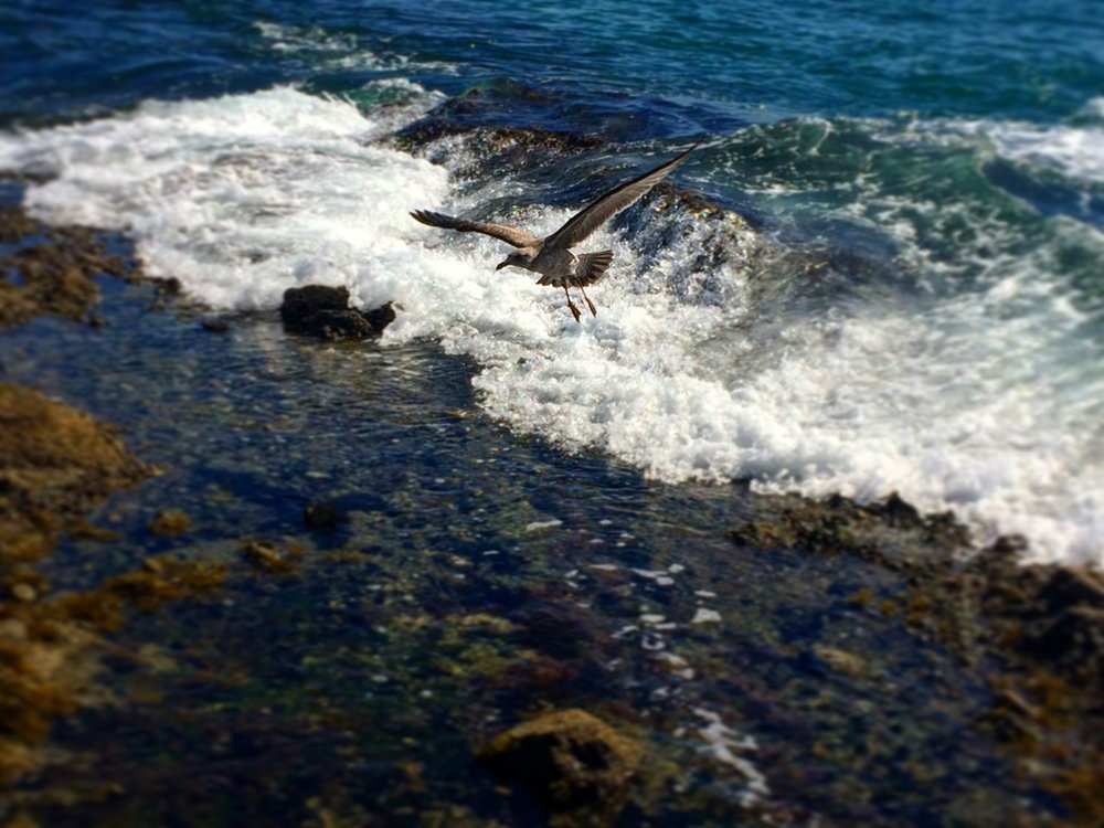 A bird flying near the Pirate Tower in Laguna Beach