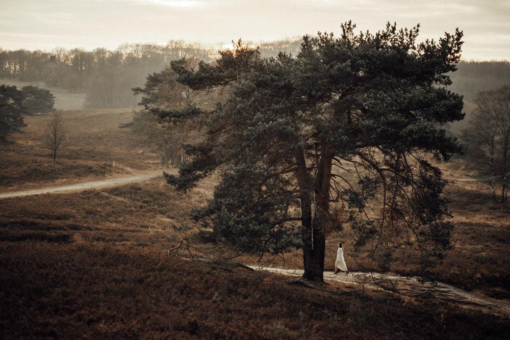 Das Bild zeigt das Hochzeitspaar beim Paarshooting am Tage der Hochzeit in der spektakulären Naturlandschaft der Brunssummerheide in Holland, unweit von Aachen NRW entfernt, beim Sonnenuntergang.