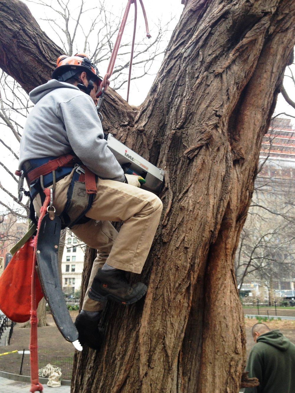 TREE RISK Aloft Resistograph.jpg