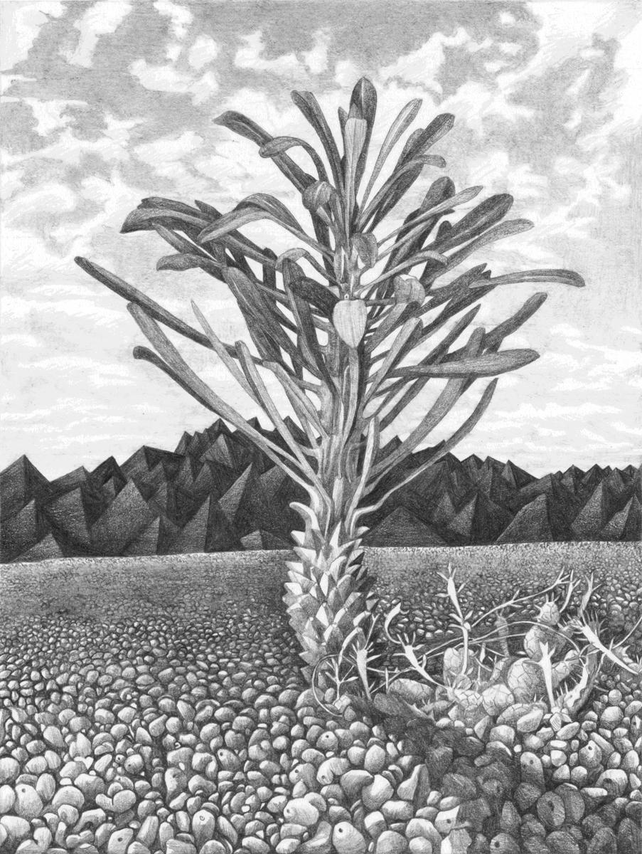 Monadenium & Euphorbia