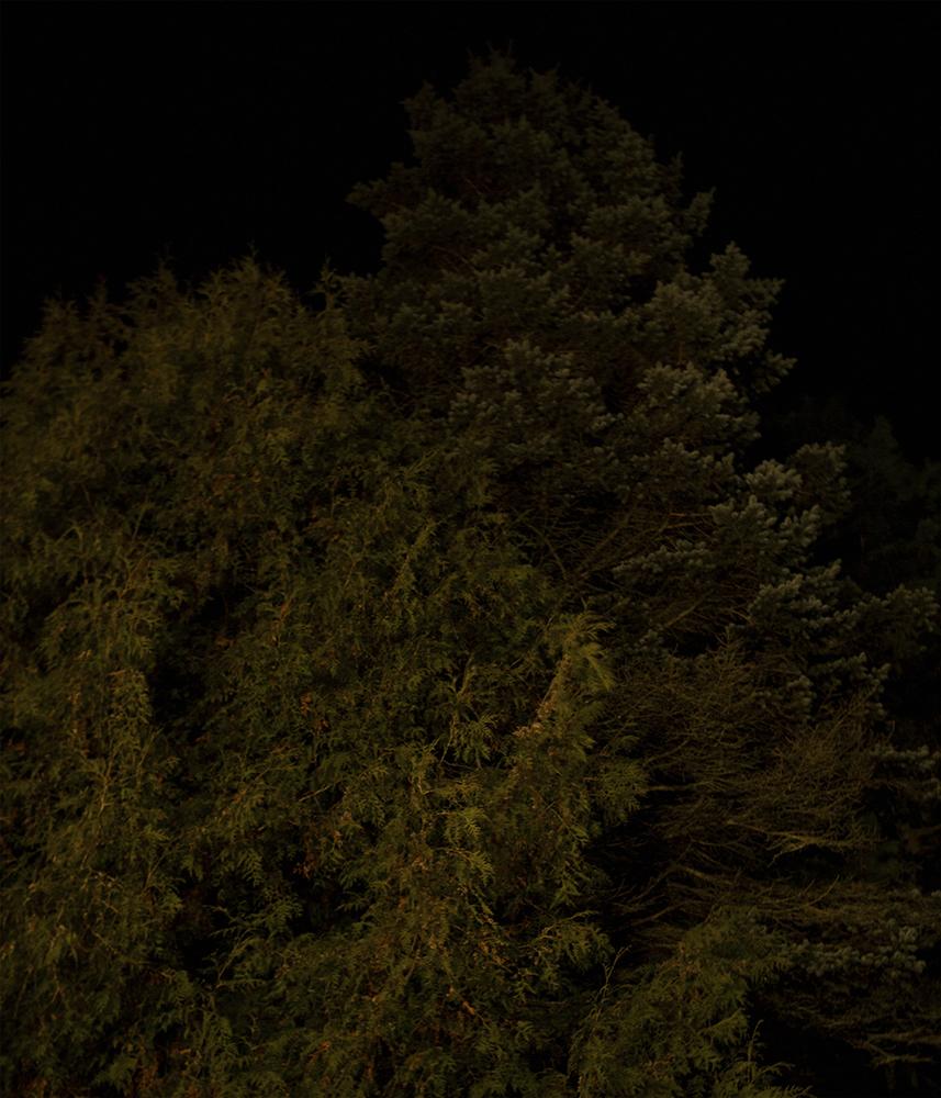 isopuu2lahtis.jpg