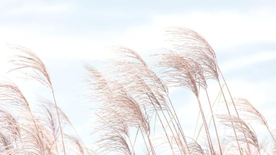 Le vent.png