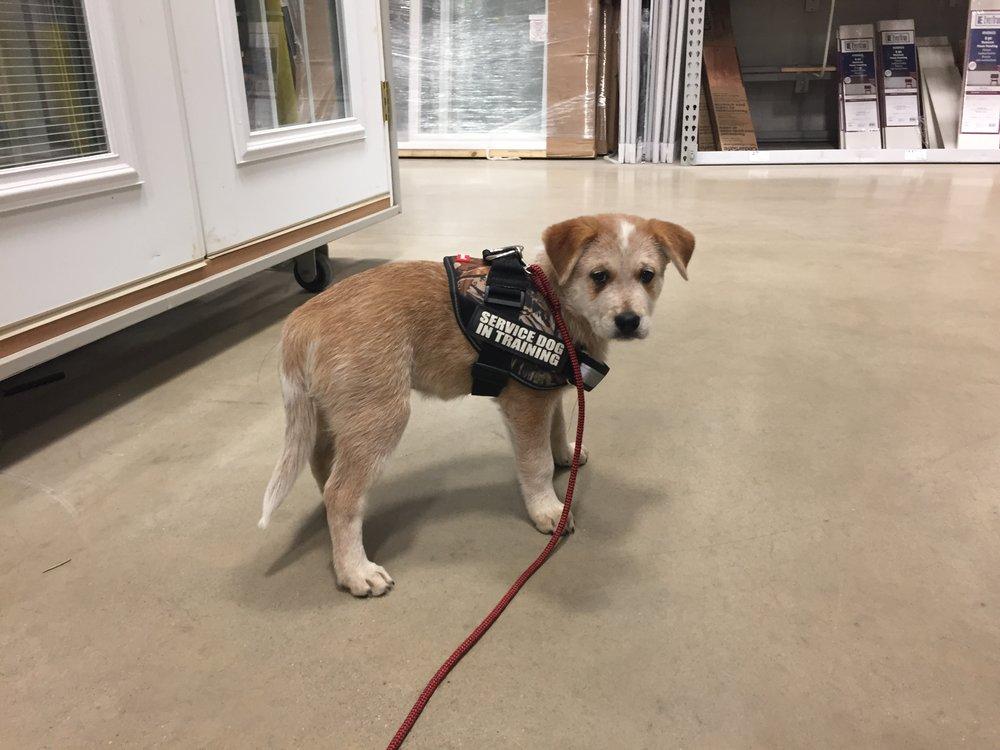 Autism Assistance Dogs Heelers 4 Heroes Healers 4 Hope