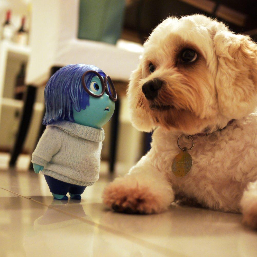 sadness_dog.JPG
