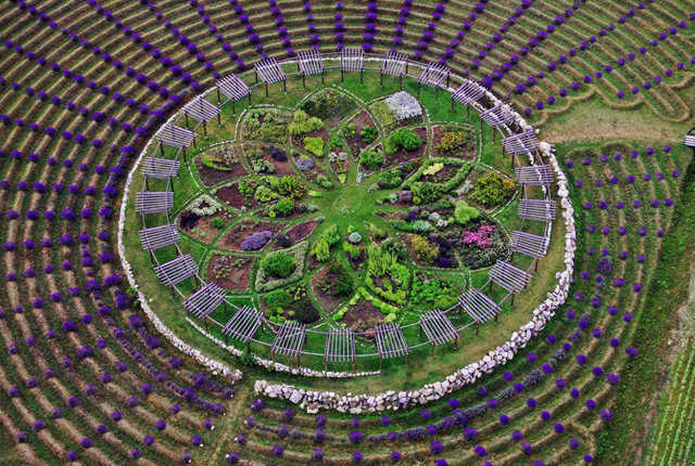 photo: Lavender Labyrinth in Shelby, Michigan