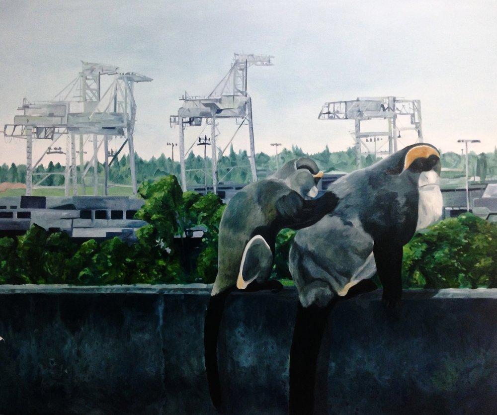 De Brazza's monkeys