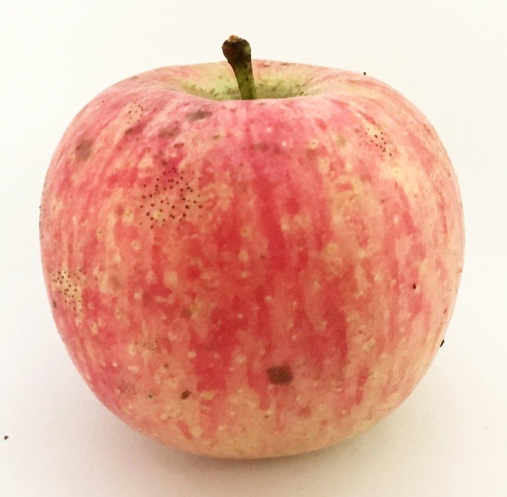 Blenheim Orange Apple