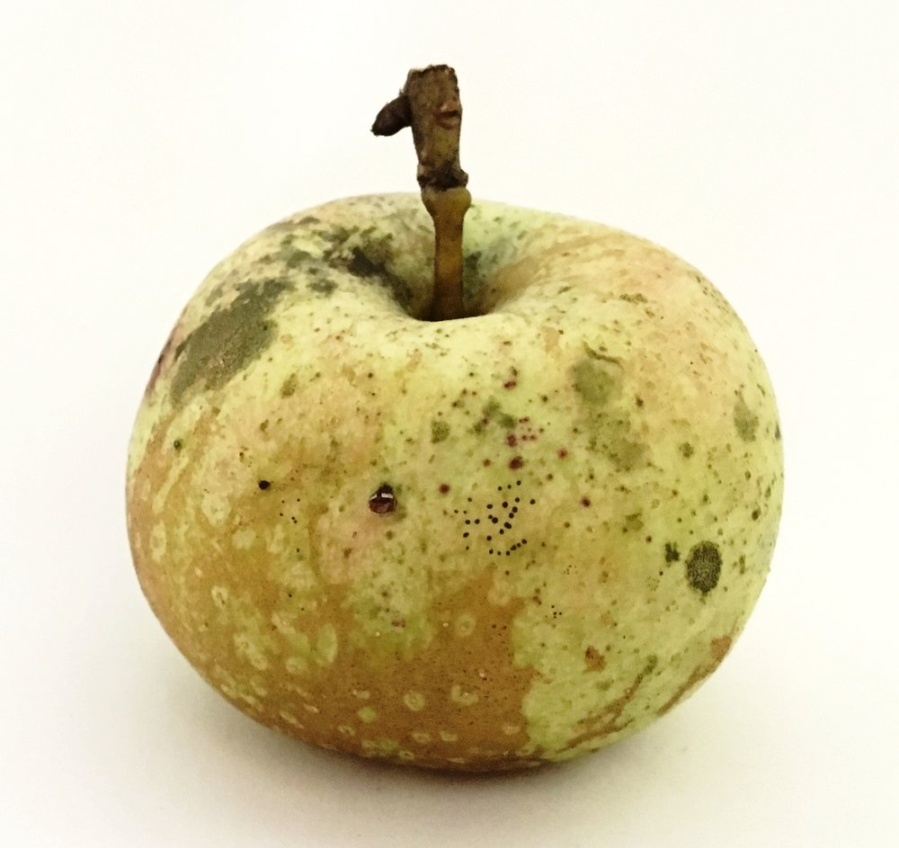 Russet Cow Apple