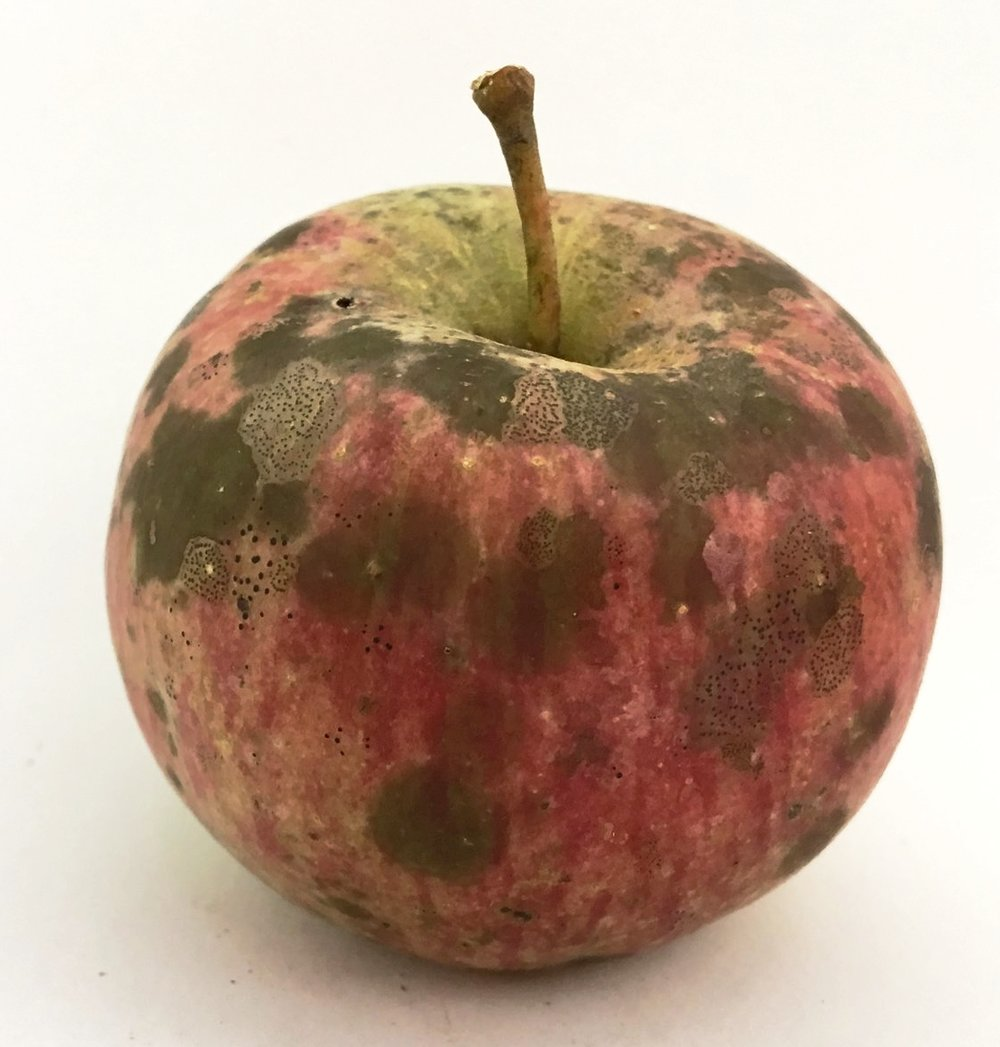 Stump Apple