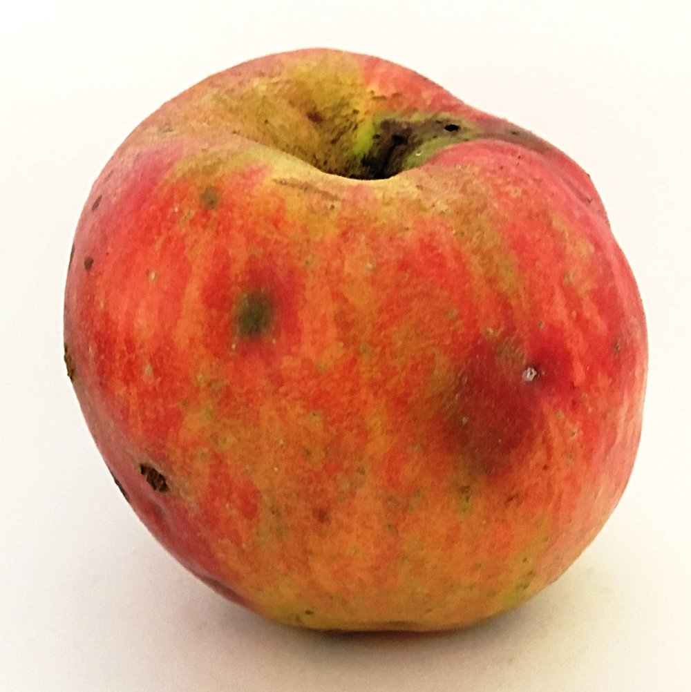 Marin Oufroy Apple