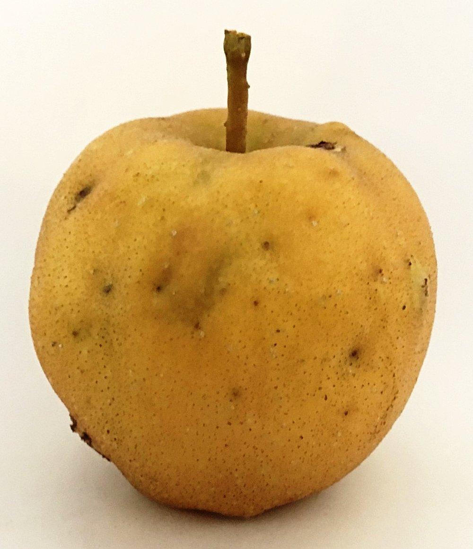 Razor Russet Apple