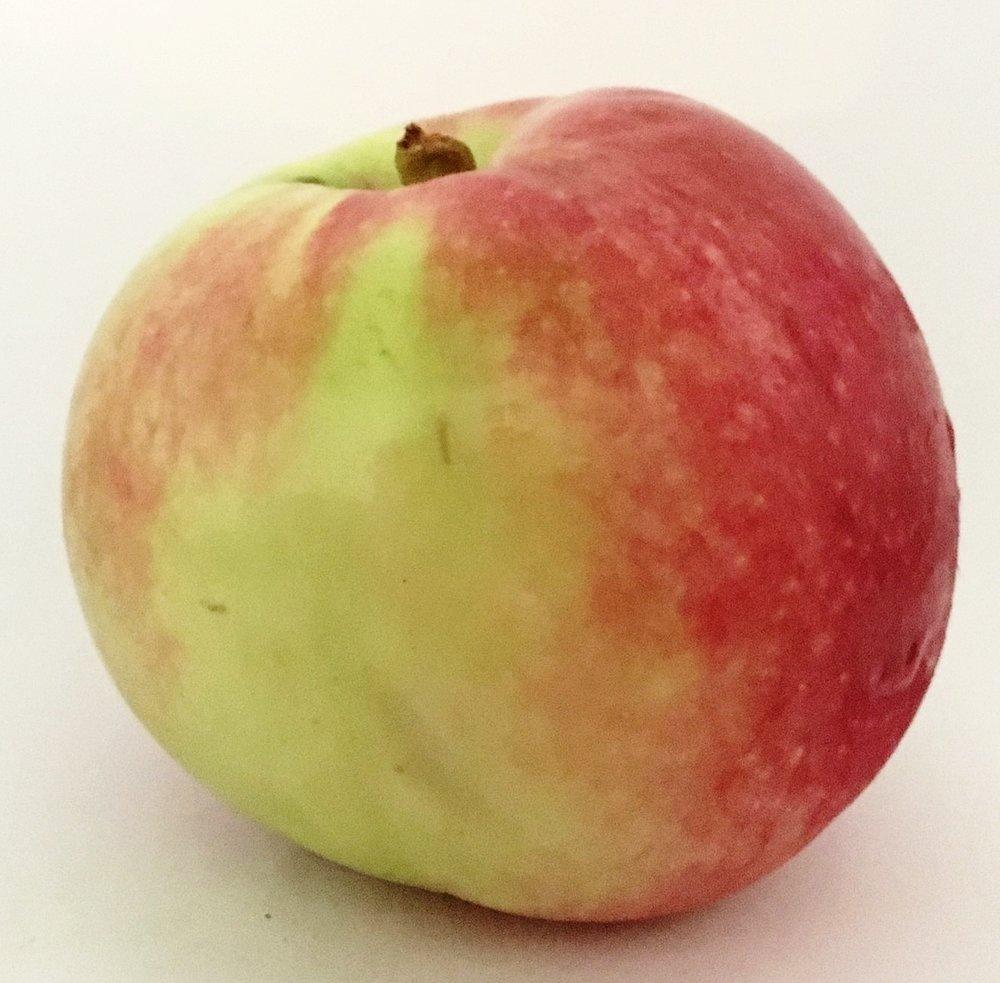 MacIntosh Apple