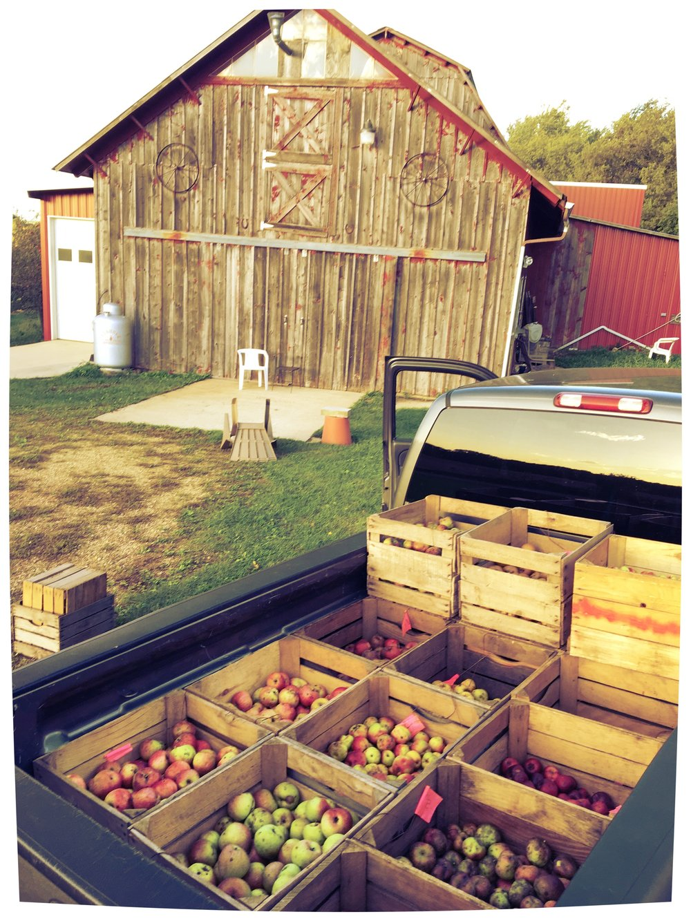 Above:  Apples from Albion Prairie farm.