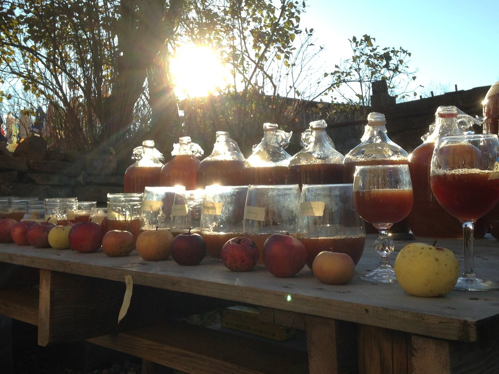 Above: Backyard cider experiments