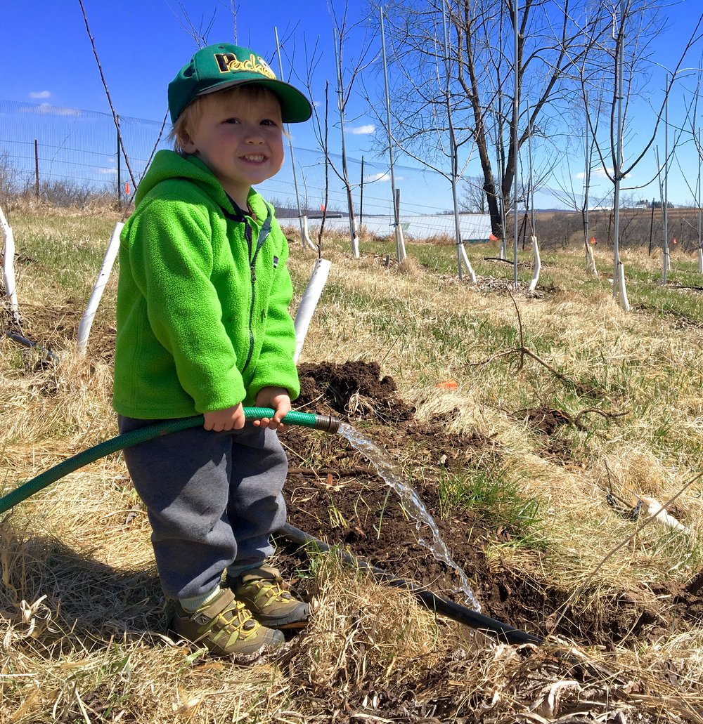 Above: Teddy planting trees - we're trying to instill our tree hugger values at an early age