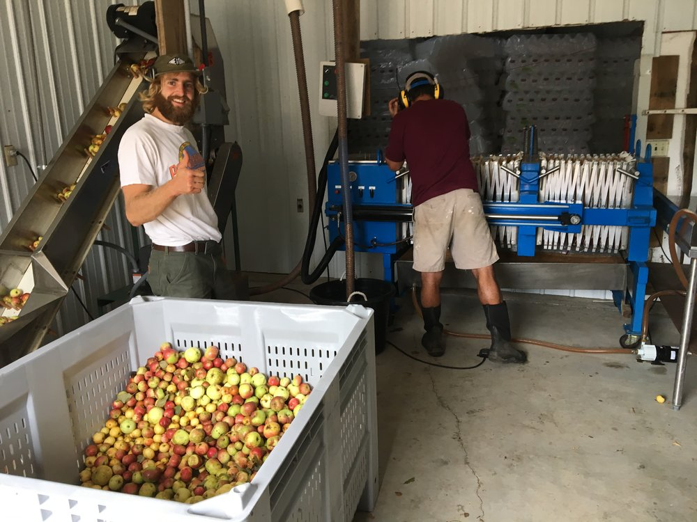 Above: Tom and Rami pressing apples